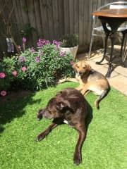 Spud and Minnie in our garden