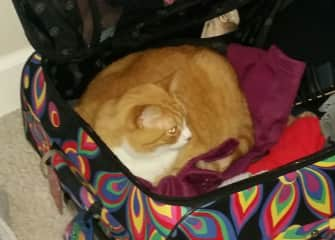 From our very first sit, Winslow, loveable with big character, I chuckled to find him in my suitcase on packing day.