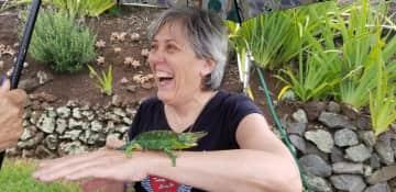 Jackson's chameleons were everywhere in Kula, Hawaii!