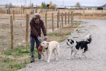 Nash playing with the dogs at a yak farm.