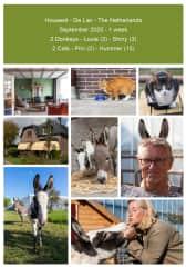 Housesit 2 Donkeys - 2 Cats - De Lier - The Netherlands 2020