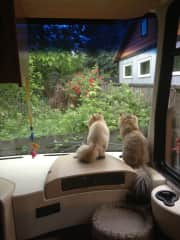 Roxy & Remy in the RV