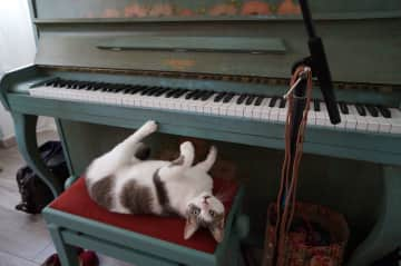 Our neighbor's cat at my piano!