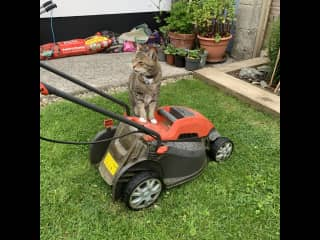 Our cat Misha helping to cut the lawn!!