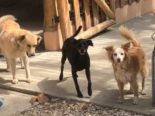 Gomez, Pepper & Lulu