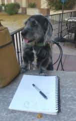 Portrait of the artist as an old dog.