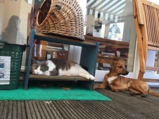 Luna the cat and Pilu' the dog