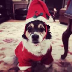 Our doggie Tejo.