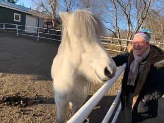 Cracking jokes with an Icelandic horse.