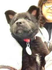 As a puppy, 2012