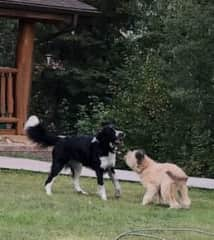 """HouseSit: Touls and TePeek: """"we like to play...all the time!"""""""