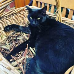 Dante is an affectionate and friendly people orientated cat that loves cuddles, sleeping and his food.