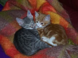 Tiger and Honey - our very first cats. Tiger lived to the lovely age of 20 :)