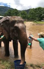 An elephant encounter in Thailand!