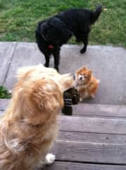 This photo is from a six-week housesit. Total population: 4 dogs, 1 horse, 1 cat, and16 chickens. It kept me busy!