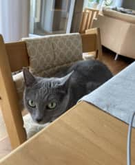 Melina's cat Nelly! she likes to sit at the dining table when I'm working.