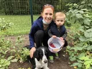Picking raspberries!