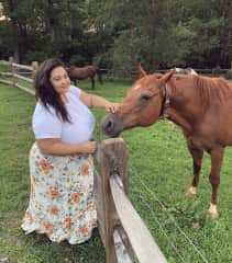 Feeding some horses at a lovely Airbnb in Asheville, NC