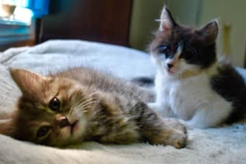 My cats when they were young--Belle and Mr. Winkle.