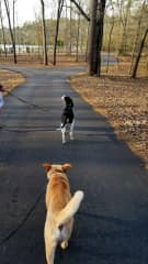 Daily walk around the lake with Lulu and Henry