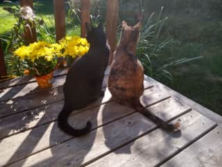 Our cats, Kepler and Tanna, who are currently staying with Brooks' veterinarian sister