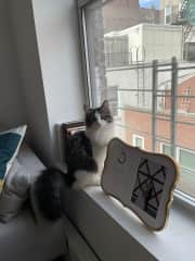 He takes window duty very seriously.