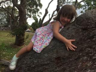 Olive Tree Hugging