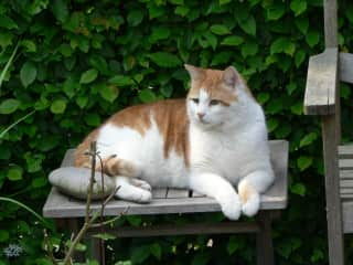 Our cat 'Floris' who died 2 years ago.
