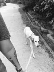 Taking gorgeous Sally for a walk around Rokko Island, Japan