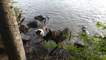 My best friends dogs at the lake.