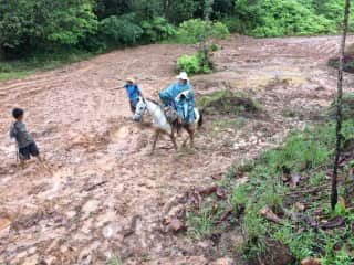 Recent trip by horseback in Panama.  Rescued a puppy along the way...