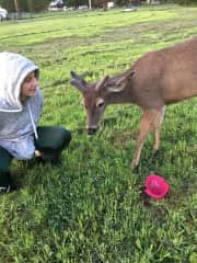 Daughter w/  our neighborhood deer, Raymond.