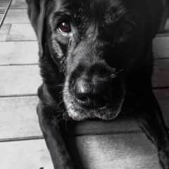 Styx, our doggy (passed away in '18)
