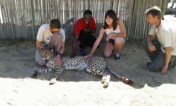 Us, lucky to meet a cheetah at the Cheetah Outreach in Cape Town, with the guides