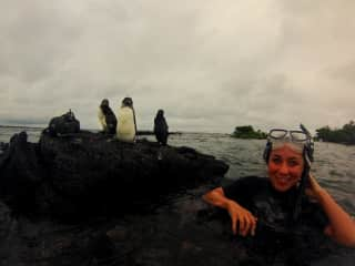 snorkeling with penguins in the Galapagos! An after-work adventure!