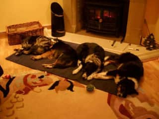 Some of our lovely dogs, two of our own, the neighbours and my mothers