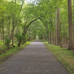I love being out in nature, walking and hiking especially. This is a favorite spot in a park near home. I moved to Asbury Park in 2019 after close to 20 years in another town in NJ about an hour from here.