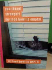 Sooo much cat!
