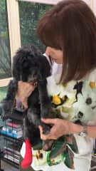 Caring for 19 year old poodle