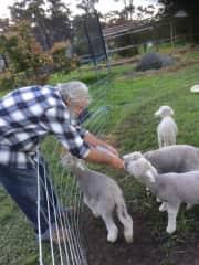 Bill & the pesky orphan lambs