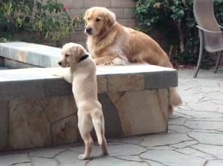 Boomer and friend