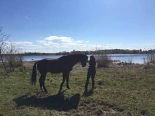 Sasha, a very special horse I met in Riga,