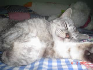 Penelope, our beloved cat who passed away