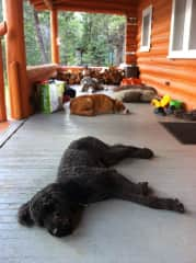 Jack with neighbouring dogs napping after big play