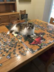Ryan loves helping with puzzles!