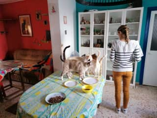Petsitting Sanlucar, Spain