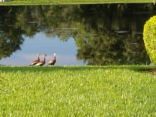 Visiting Ducks...