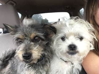 They LOVE car rides!