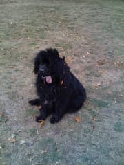 Florian, looking sated after a late summer rollick in the park.