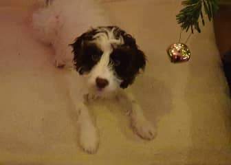 Yet to update with more pics, but for now this is Bertie, a new addition to the wider family